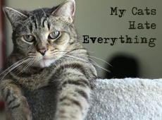 cats_hate_everything_banner