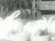 BunnyFactory_230x167